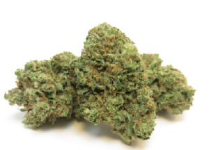 Durban Poison Strain has THC levels that can reach 24%, making it one of the world's more powerful strains. It hits with a strong, happy head high