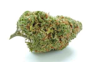 Green Crack has sweet flavor with tropical n citrus notes. Buds are dense and tight. High is decidedly cerebral, with a big mood boost and a jolt of energy.