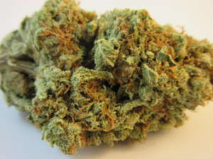 Maui Waui helps provide you with energy to get through the day without the racy effects that you would expect from other Sativa strains.