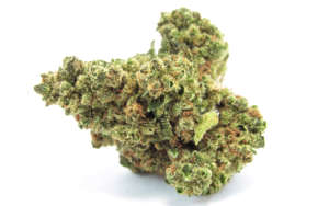 Due to its super high 32% average THC level. Original Glue Strain is said to be perfect for treating conditions such as chronic pain