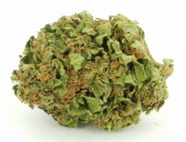 Platinum Wreck will lift your spirit n leave you feeling creative n giggly. Its euphoric effects will lift you higher n higher leaving you feeling light
