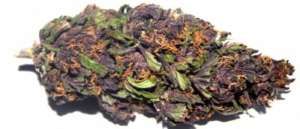 Purple Haze Bud has a sweet earthy berry aroma and a pungent berry taste with a hint of spice. Great strain against; fatigue, depression, stress, anxiety.