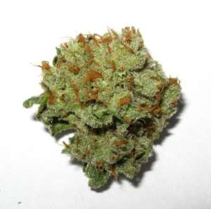 Super Lemon Haze Strain has Sativa/Indica ratio of 80:20. This gives the strain heady, peppy, cerebral effects making it ideal for depression, fatigue, pain
