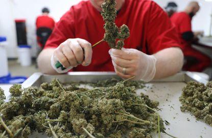 Recreational marijuana in Chicago